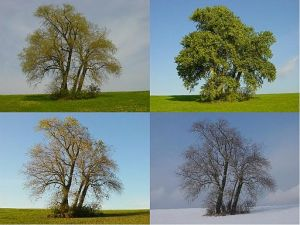 512px-Four_Poplars_in_four_seasons (1)